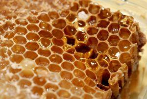 1147974_honeycomb_3
