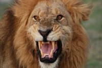 afrika-lev