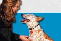 Pat Millerová: Restartujete svého psa - náhled