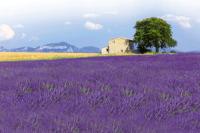 Toulky-po-Provence-perex