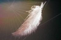 white-feather-1431676-m