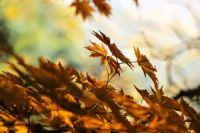 tvorive_inspirace_pro_podzimni_pliskanice
