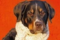 Heike Achnerova_Prirodni lekarna pro psy