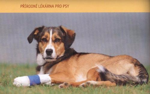 Heike Achnerova_Prirodni lekarna pro psy_ukazka1