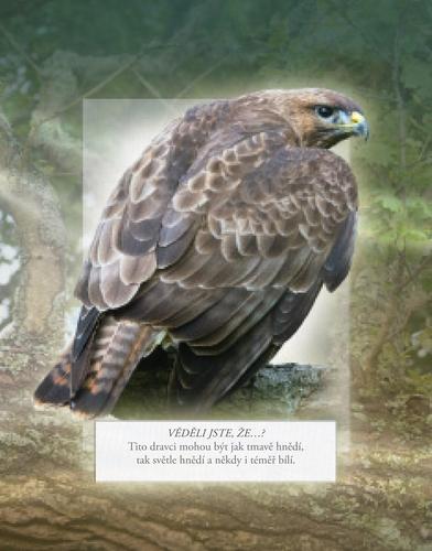 Ptaci nasich lesu_ukazka2