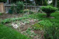 zelenina-zahrada-2