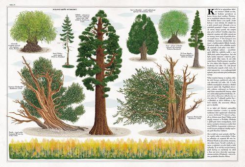 Stromy_ukazka z knihy