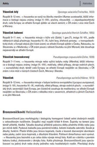 Lastuvka_Drobni motyli_ukazka1