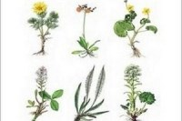 Rostliny nasi prirody