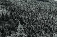 les v zime_neuwirth