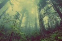 forest-mysterious-adventure