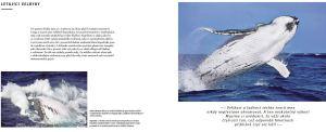 Ukazka-z-knihy-Na-svou-prvni-velrybu-nikdy-nezapomenes