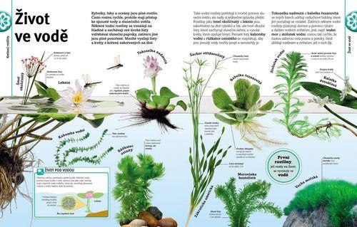 Stromy listy kvety a semena_ukazka