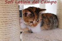 Vosobni muj personal_Sofi Letizia del Campo