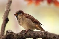 ptak-nahled